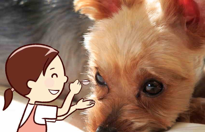 ご飯を食べない老犬に飼い主がしてあげられる介護|余命を1日でも伸ばす