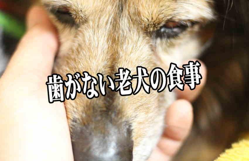歯がない老犬の食事には食べやすい高級鹿肉シチュー【モグデリ】がおすすめ